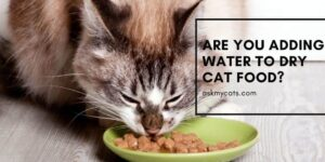 Are You Adding Water To Dry Cat Food? You Must Know These Reasons!