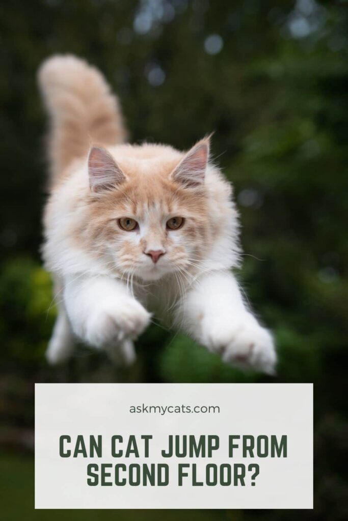 Can Cat Jump From Second Floor