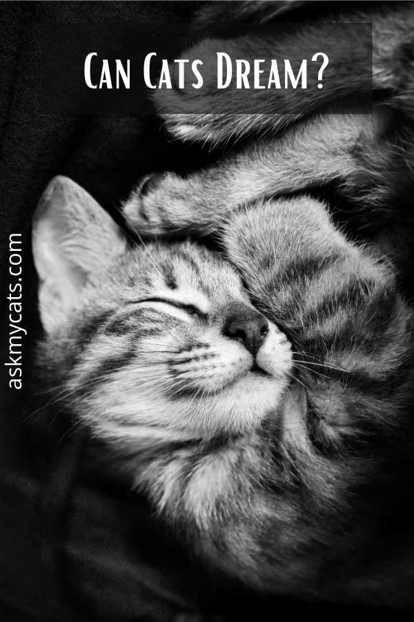 Can Cats Dream?