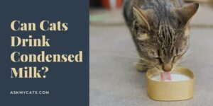 Can Cats Drink Condensed Milk? Know These Authentic Answers!