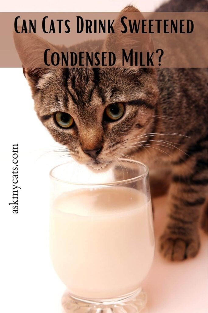 Can Cats Drink Sweetened Condensed Milk