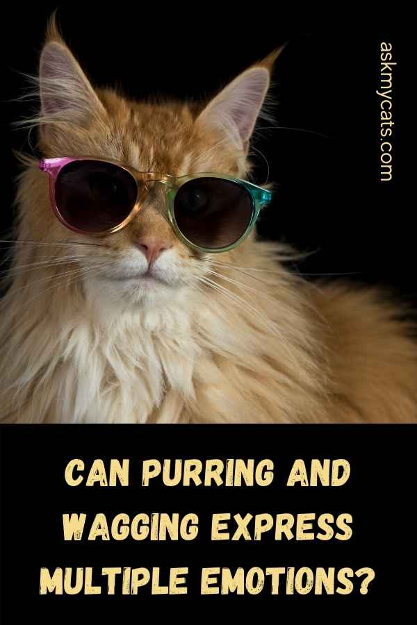 Can Purring And Wagging Express Multiple Emotions?