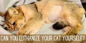 Can You Euthanize Your Cat Yourself? Here's What You Need To Know!