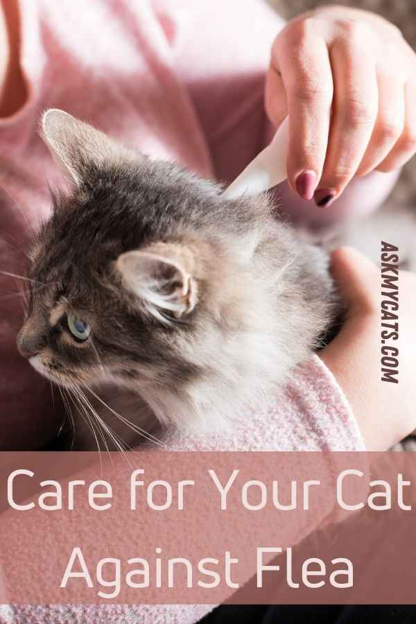 Care for Your Cat Against Flea