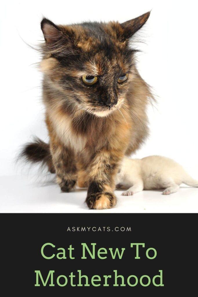 Cat New To Motherhood