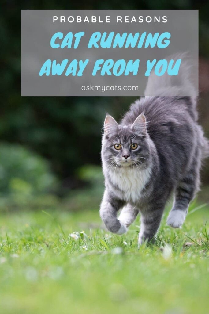 Cat Running Away From You Probable Reasons