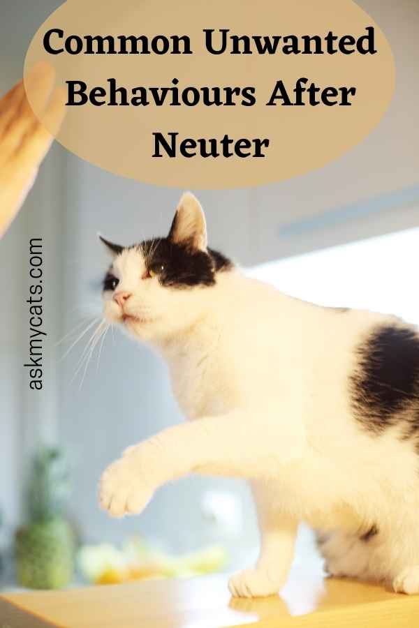 Common Unwanted Behaviours After Neuter