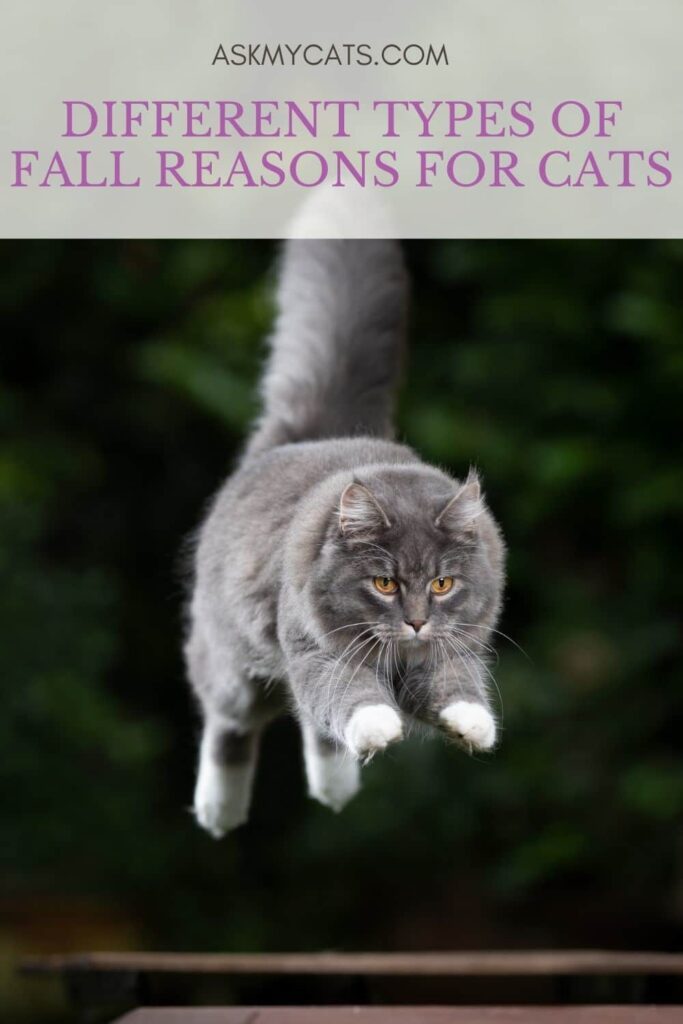 Different Types Of Fall Reasons For Cats