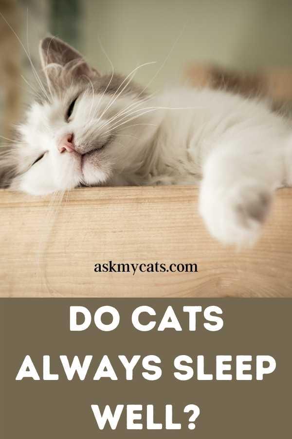 Do Cats Always Sleep Well?