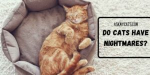 Do Cats Have Nightmares? Know These Shivering Facts!