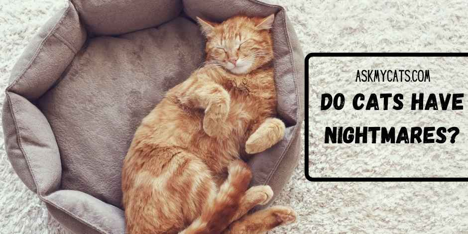 Do Cats Have Nightmares