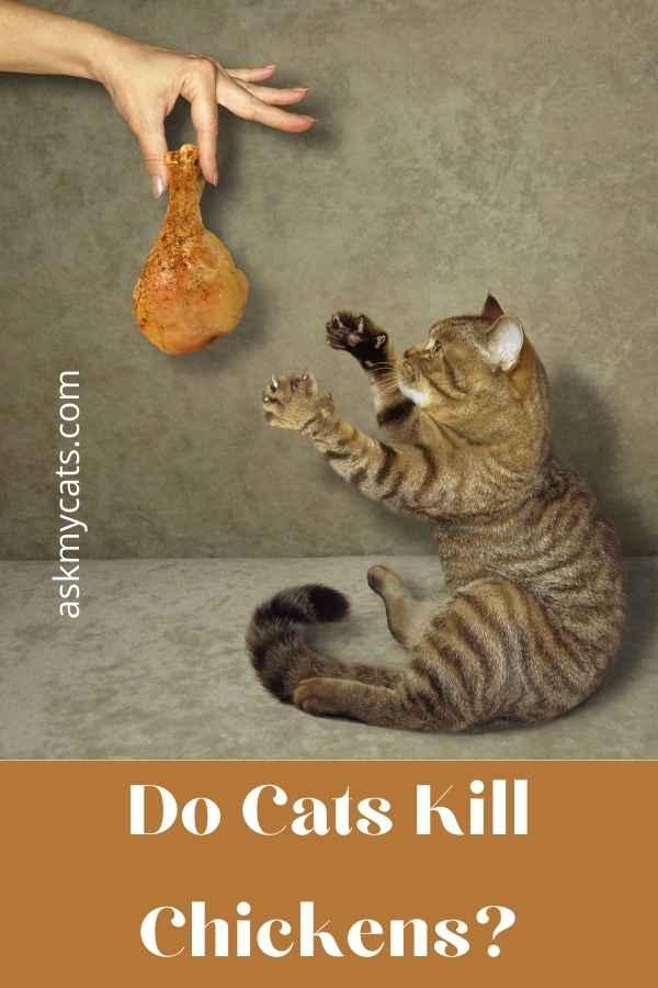 Do Cats Kill Chickens?