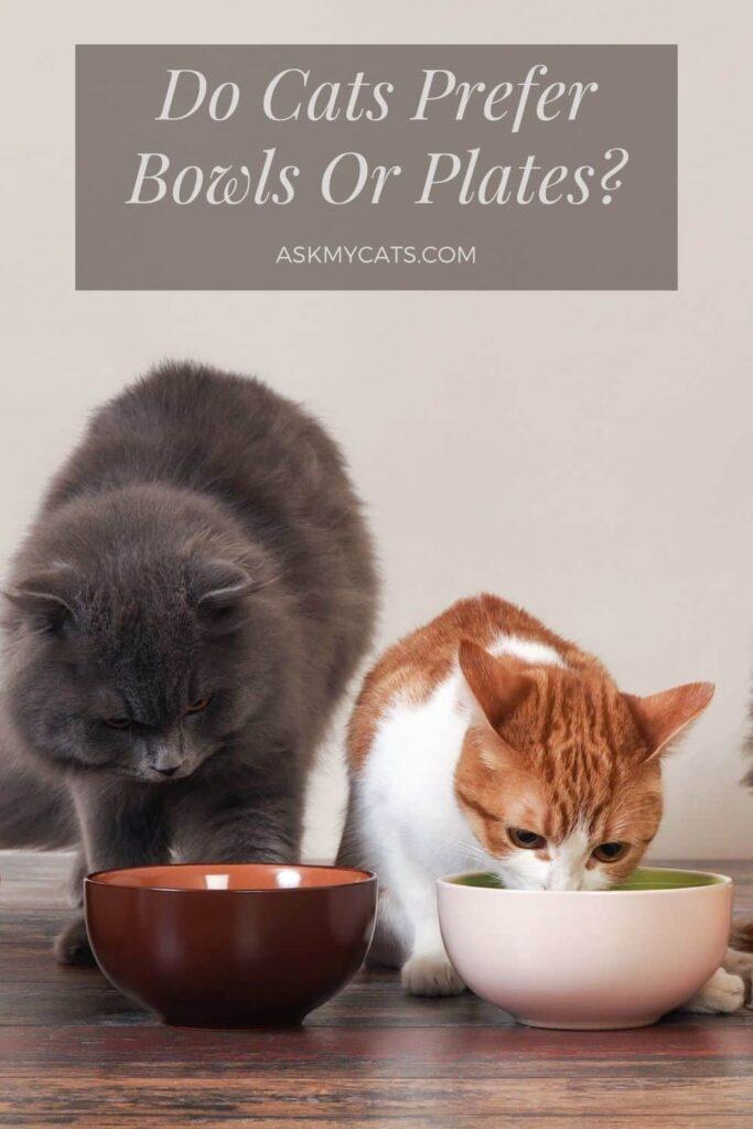 Do Cats Prefer Bowls Or Plates
