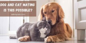 Dog And Cat Mating- Is This Possible?