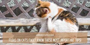 Fleas On Cat's Face? Know These Most Important Tips!