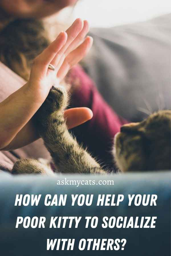 How Can You Help Your Poor Kitty To Socialize With Others?