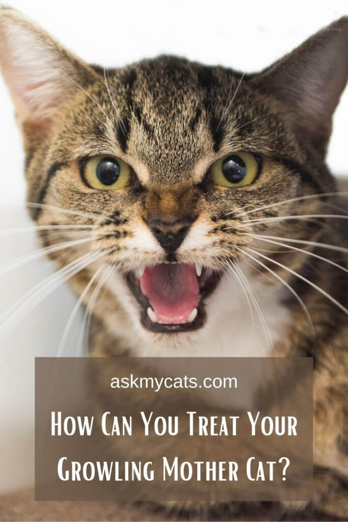 How Can You Treat Your Growling Mother Cat