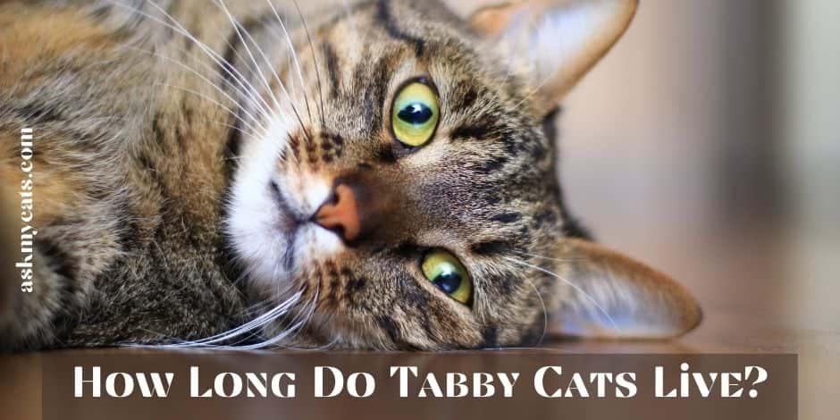 How Long Do Tabby Cats Live