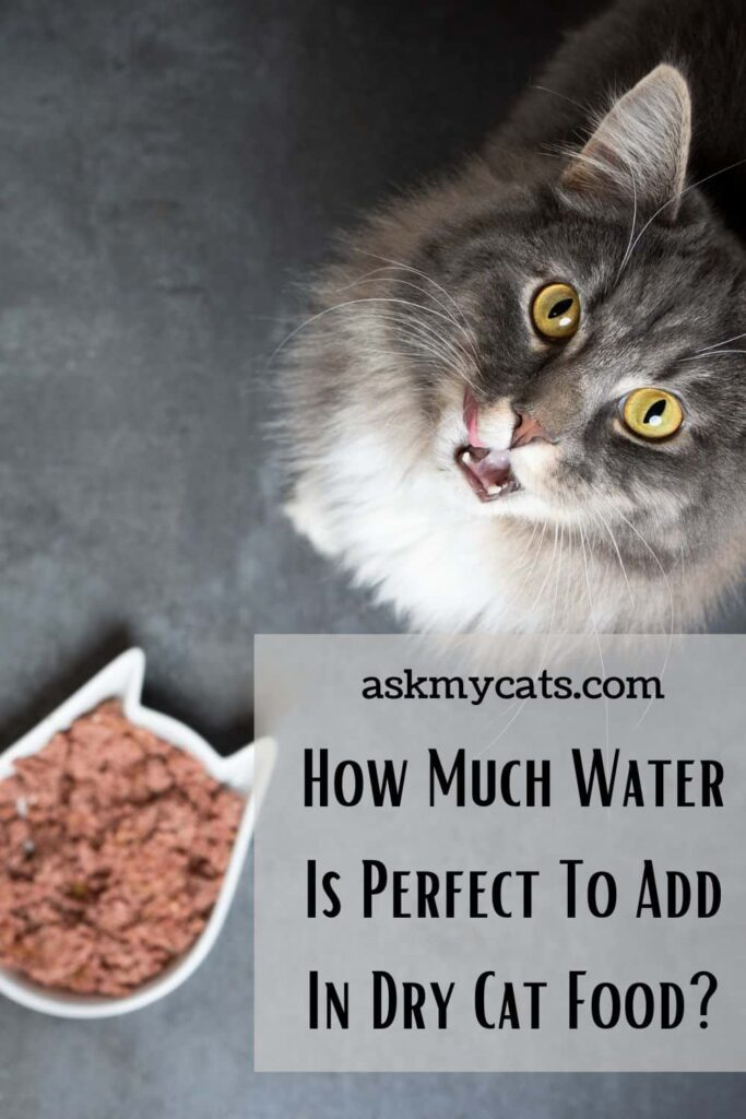 How Much Water Is Perfect To Add In Dry Cat Food