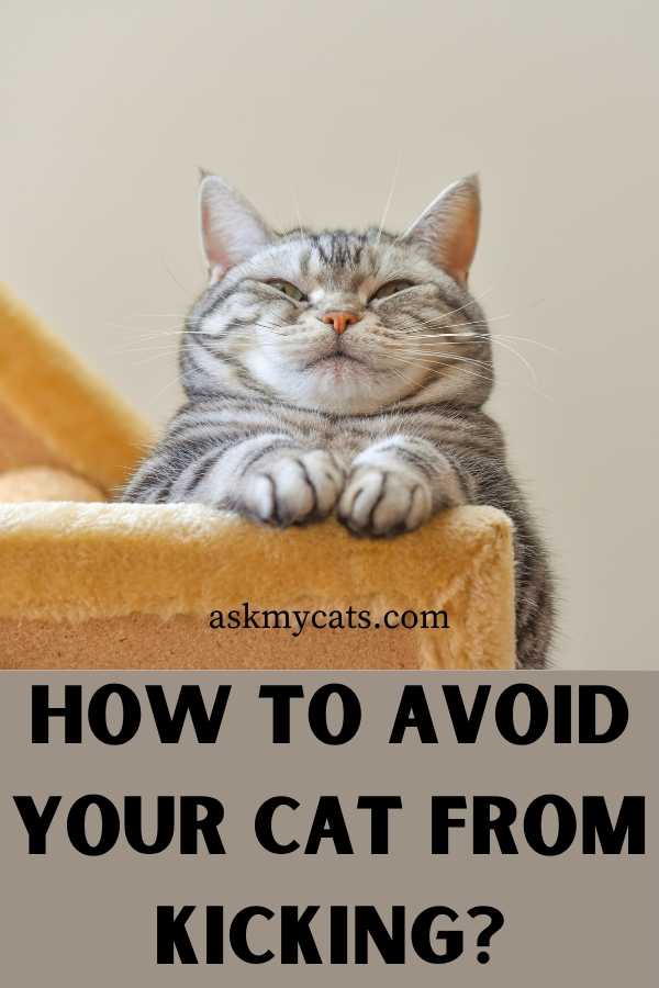 How To Avoid Your Cat From Kicking?