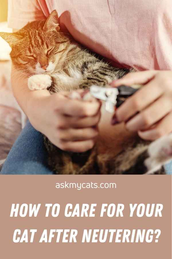 How To Care For Your Cat After Neutering?