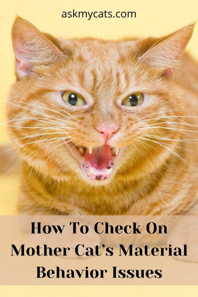 How To Check On Mother Cat's Material Behavior Issues