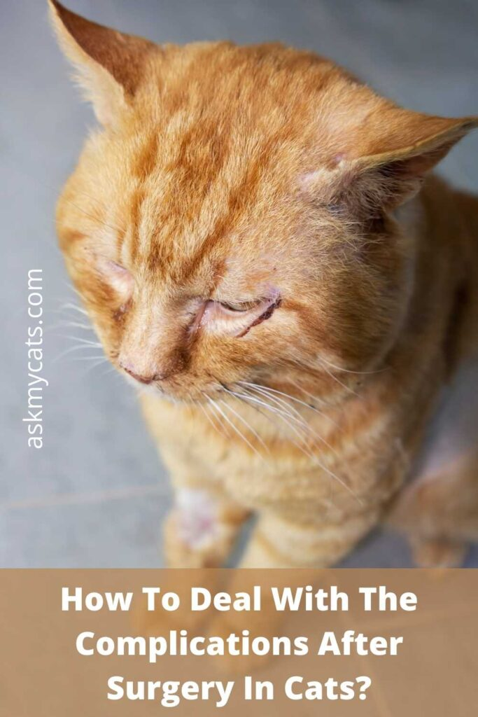 How To Deal With The Complications After Surgery In Cats
