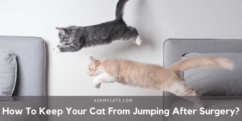 How To Keep Your Cat From Jumping After Surgery