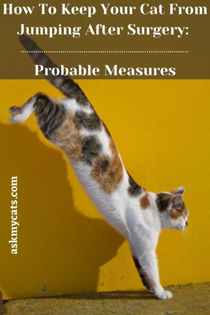 How To Keep Your Cat From Jumping After Surgery_ Probable Measures