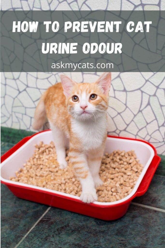 How To Prevent Cat Urine Odour