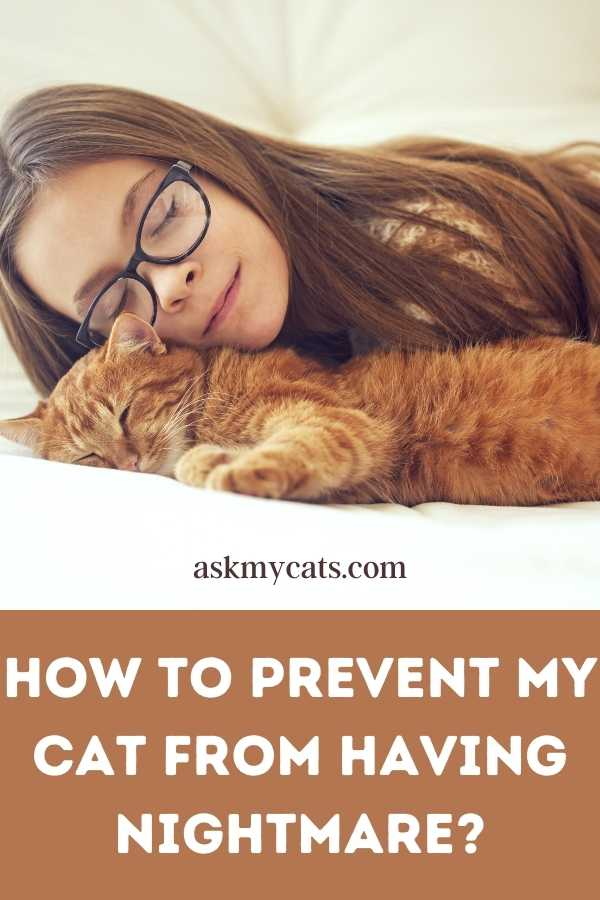 How To Prevent My Cat From Having Nightmare?