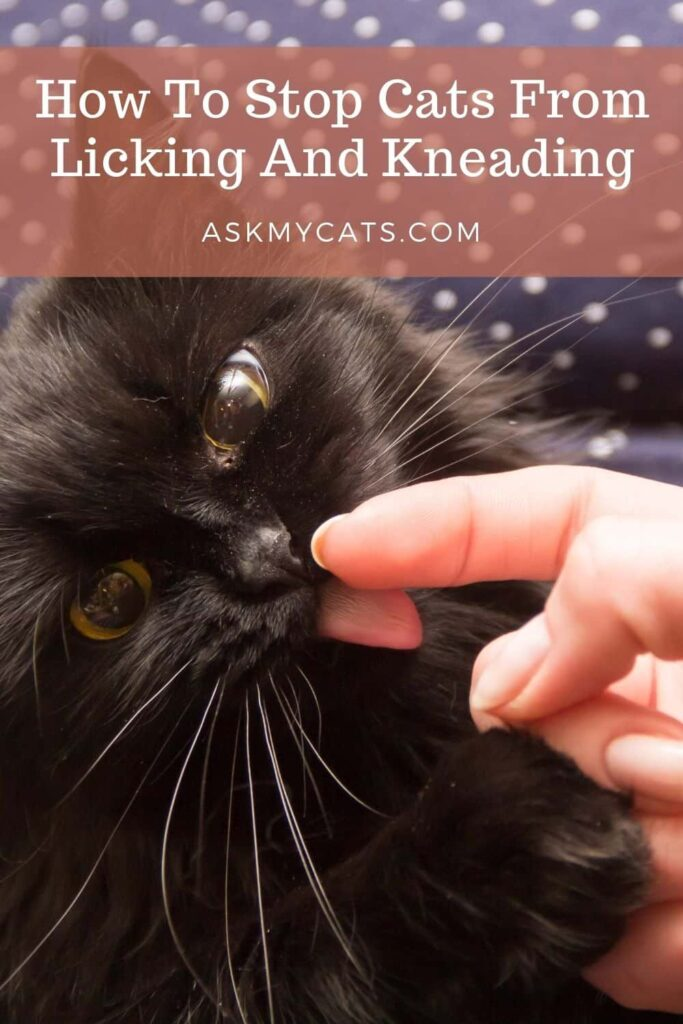 How To Stop Cats From Licking And Kneading