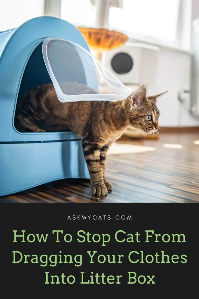 How To Stop Your Cat From Dragging Your Clothes Into Her Litter Box