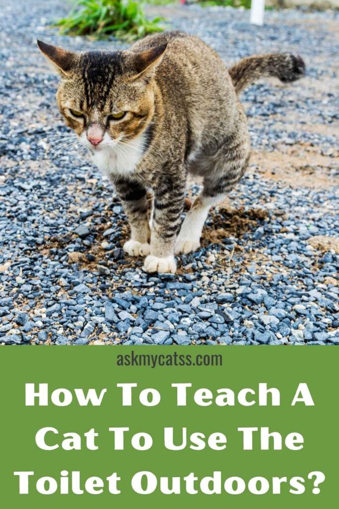 How To Teach A Cat To Use The Toilet Outdoors?