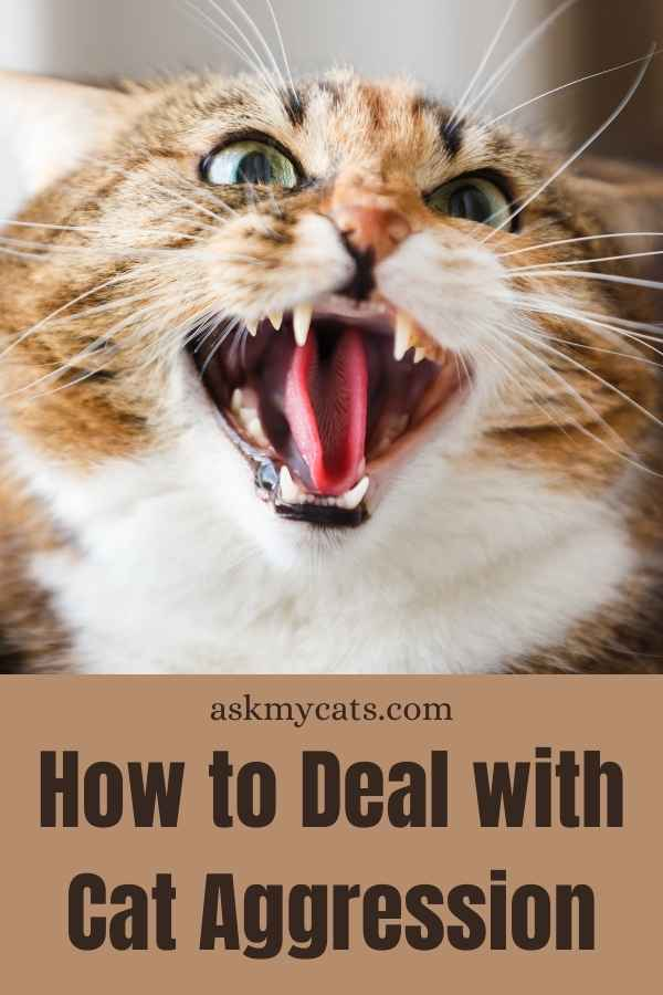 How to Deal with Cat Aggression