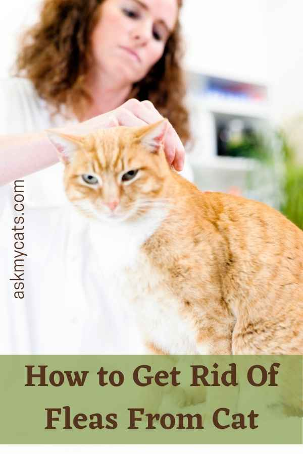 How to Get Rid Of Fleas From Cat