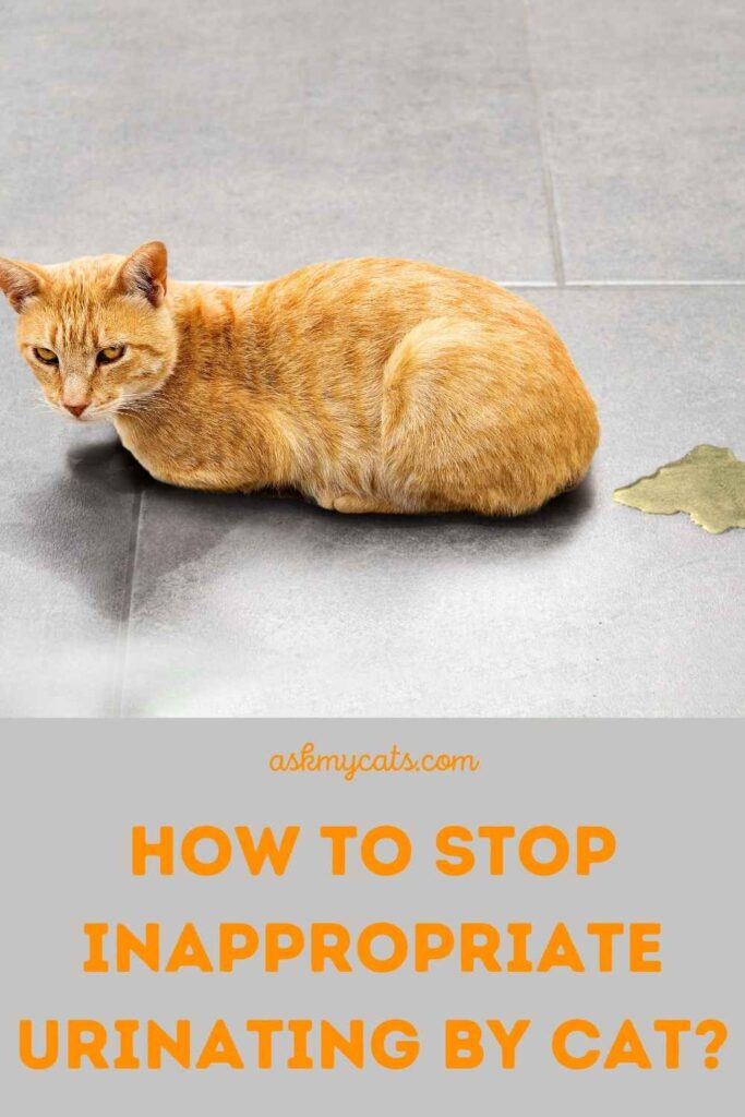How to Stop Inappropriate Urinating By Cat?