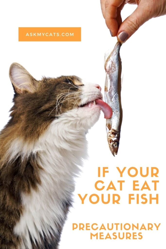 If Your Cat Eat Your Fish