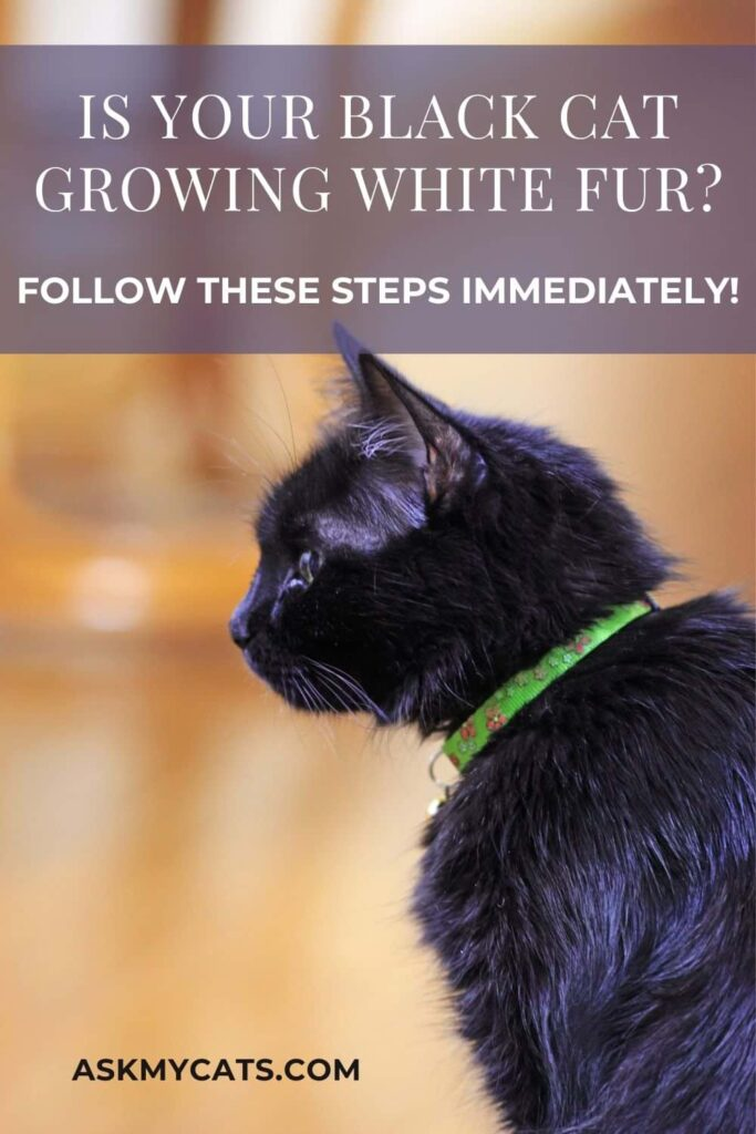 Is Your Black Cat Growing White Fur
