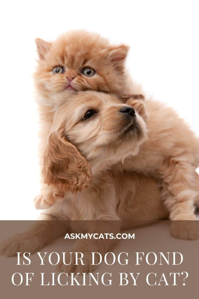 Is Your Dog Fond Of Licking By Cat