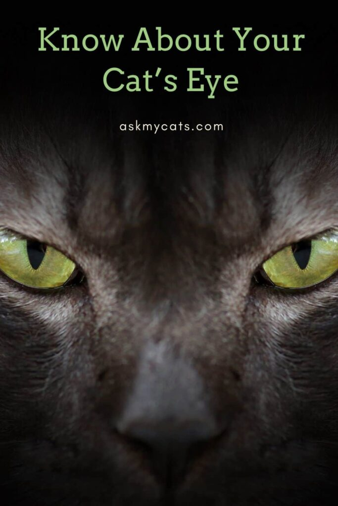 Know About Your Cat's Eye