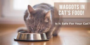 Maggots In Cat's Food! Is It Safe For Your Cat?