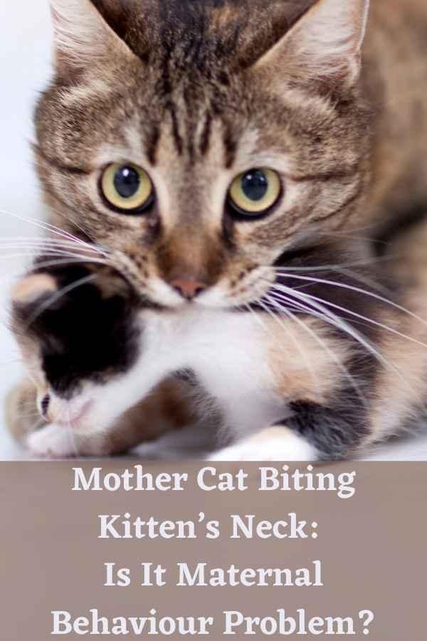 Mother Cat Biting Kitten's Neck: Is It Maternal Behaviour Problem?