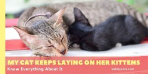 My Cat Keeps Laying On Her Kittens? Know Everything About It