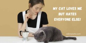 My Cat Loves Me But Hates Everyone Else! Do You Know The Reasons?