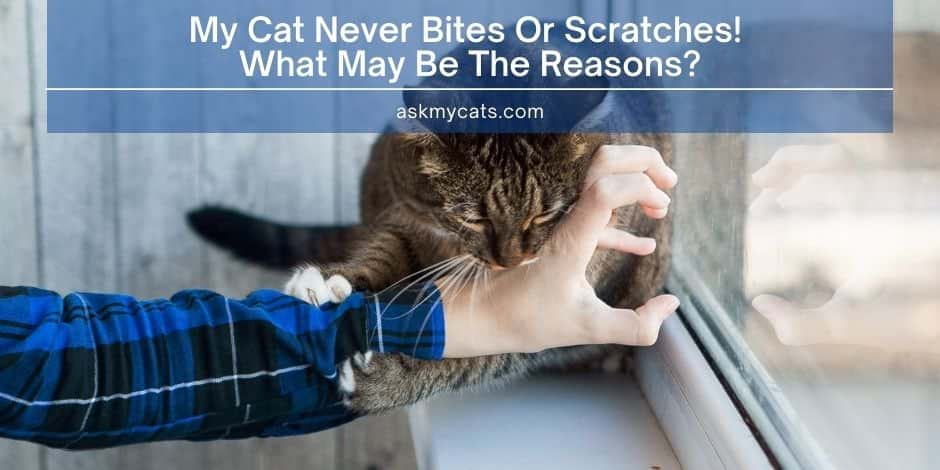 My Cat Never Bites Or Scratches