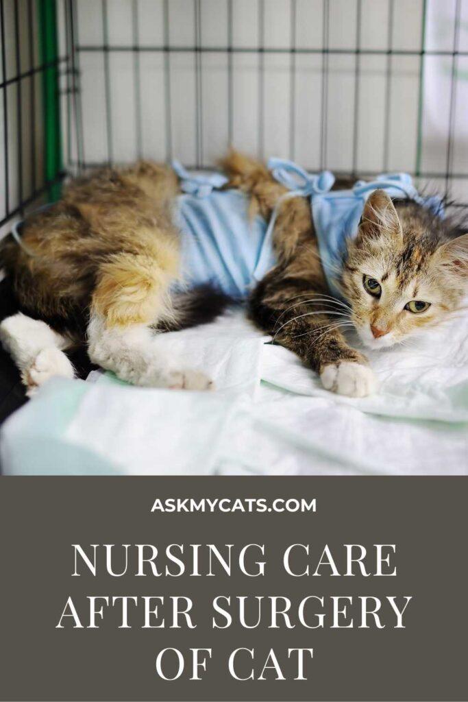 Nursing Care After Surgery Of Cat