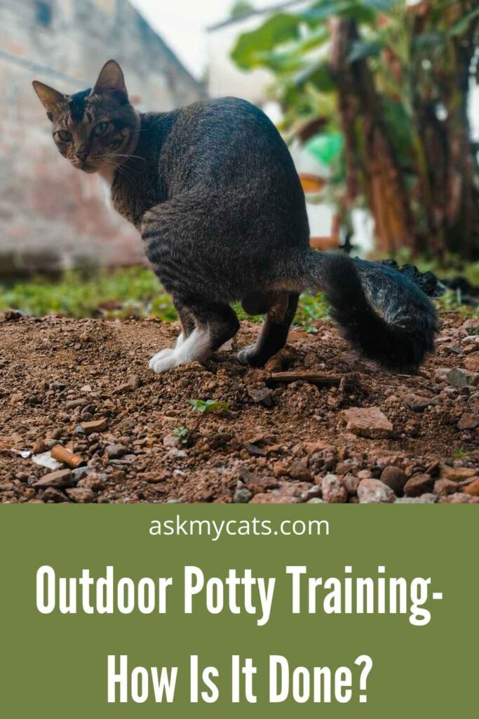 Outdoor Potty Training- How Is It Done?