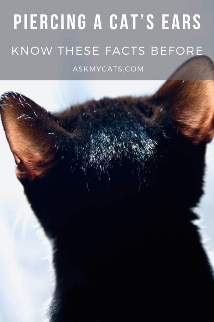 Piercing A Cats Ears