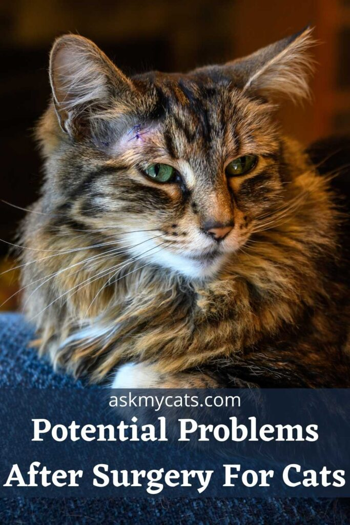 Potential Problems After Surgery For Cats